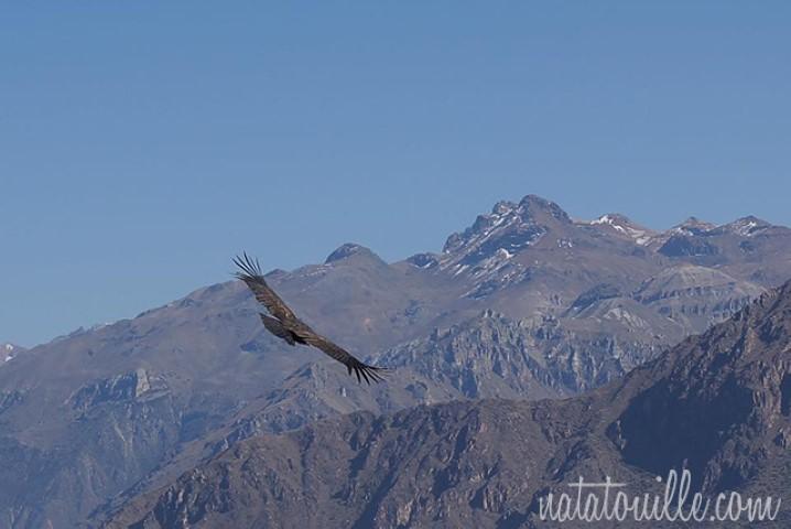 Vuelo de Condor