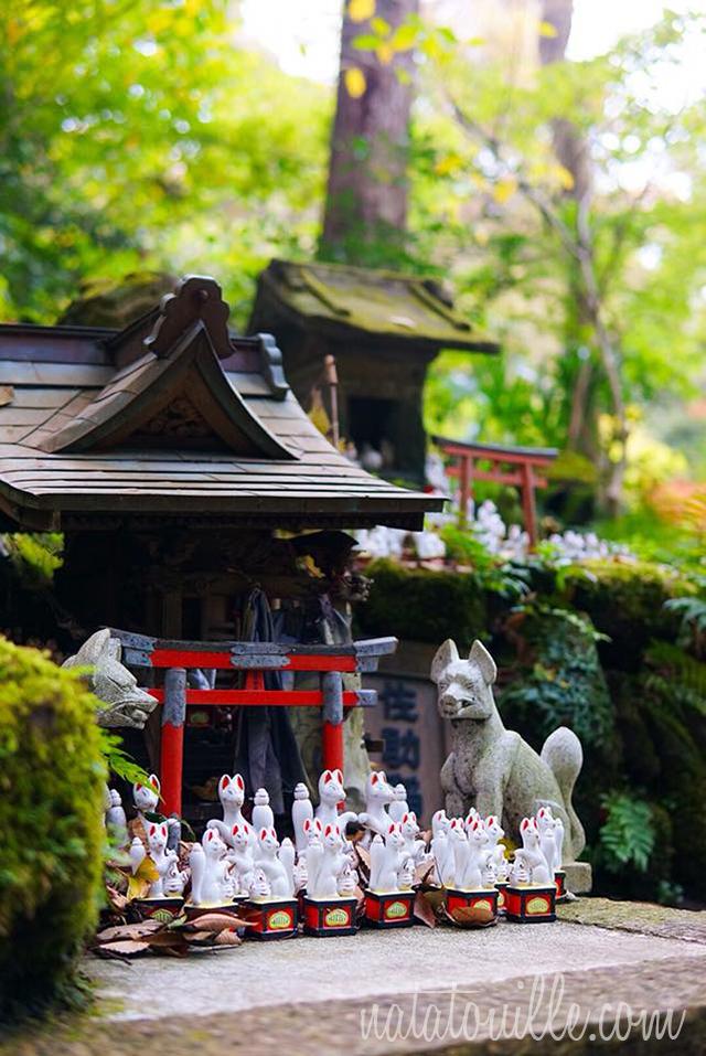 Zorritos en Templo Sasukeinari